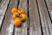 Sun Gold Tomatoes