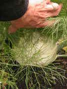 May 31, 2012 Garden Photos