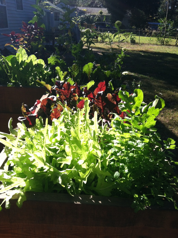 lettuce&beets