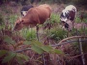 Pietermaritzburg-20131006-03268