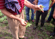 New Entry Open Farms Tour: Amaranth and Lambs Quarters
