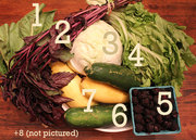 CSA Cookoff: Avocado Tuna Unroll with Pistachios and Pesto