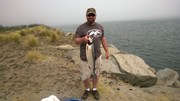 Cape Disappointment Coho