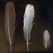 Lumen print - feathers