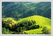 NguyenLyDuongCong_ruong_bac_thang1