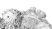 jssglvz_fractal 03 Final_resize