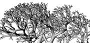 stochastic fractal
