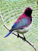 Paneling_Bird
