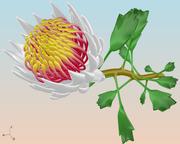 Plant devised