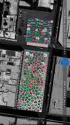 17.07: Voronoi homeland [2017]