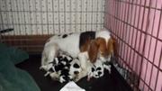 pups new 001