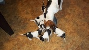 pups feeding first pic 001