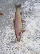 icefishing Dec 20 2014 010
