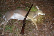 Killed this deer with my Model 1873 Winchester