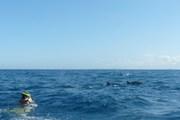 Swimming with dolphins, Zanzibar