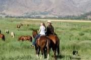 Meadow Ride
