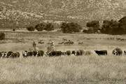 Rankin Cattle and Guest Ranch