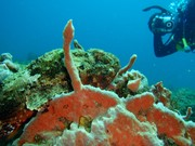 scuba-diving-panama-buceo-portobelo-colon-fish-pez-corals-corales-diver-1024x768