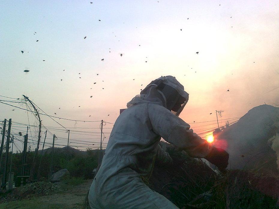 abejas volando al rededor