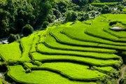 Hoang Su Phi terraced fileds