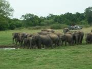 Elephant visit