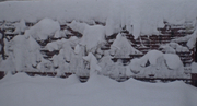Snow Mural ~Wisteria Spring 2010