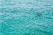 Dolphin in Bimini