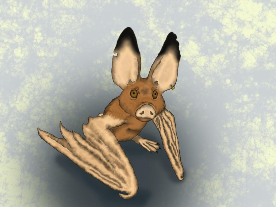 Inny the bat