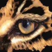 Eye of Leopard