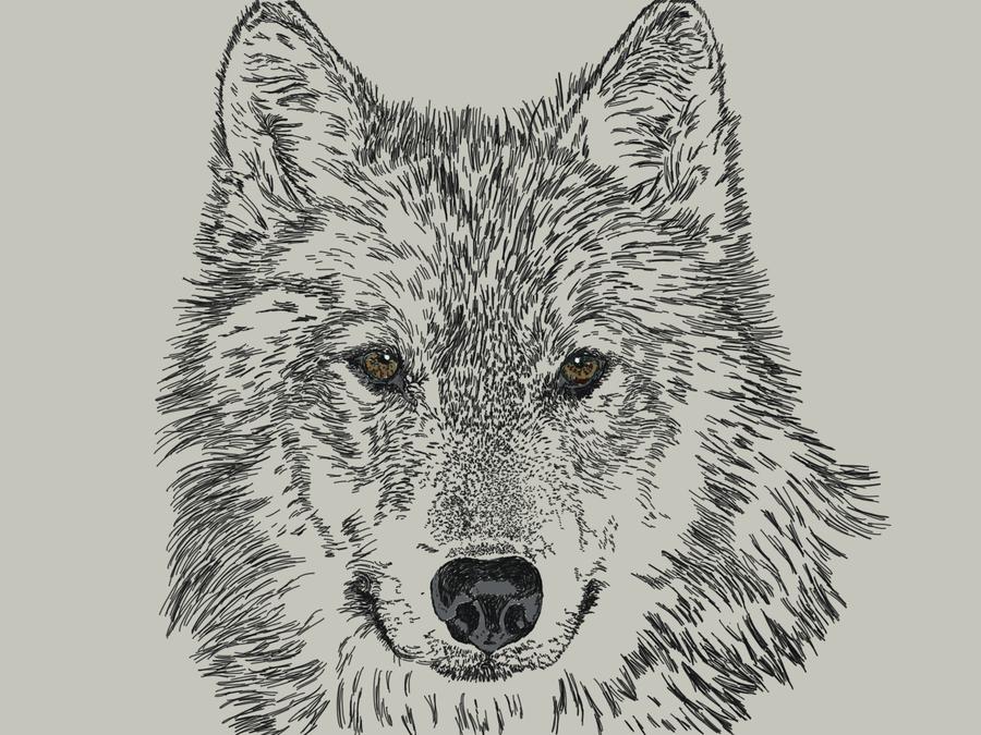 Sorein of wolf