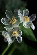 crystal flower beauty