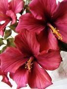 Gumpaste Flowers Classes