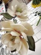 Magnolia class