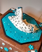 Spotted horse cake front