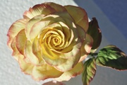 Gum Paste Rose