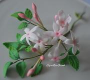 Sugar Jasmine Flowers