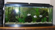 Fish Tank (from seller)