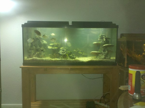 Fish tank cycling and home