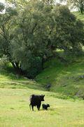 Mom & Babe - spring pasture