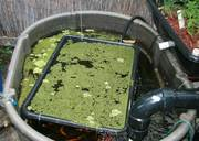 floating-duckweed-containment-vessel