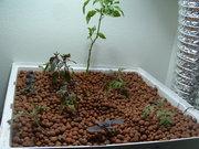 Re-Planted Garden