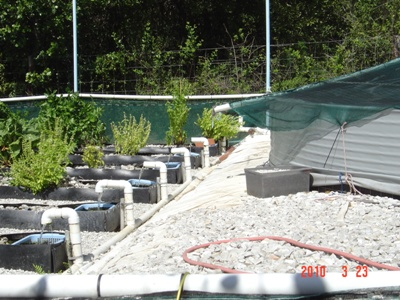 outflows from dam directly into baskets-growtrays