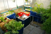 Mixed Aquaponics Design