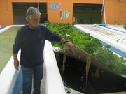 Hans Geissler,  aquaponics research in Florida