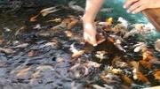 2011 Central Florida Spring Aquaponics Tour