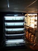 AP seedling rack