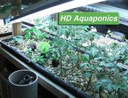 Indoor Aquaponics - HD Aquaponics