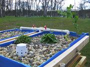 Barrel Aquaponics Spring 2011 - 2