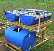 Barrel Aquaponics Spring 2011 - 4