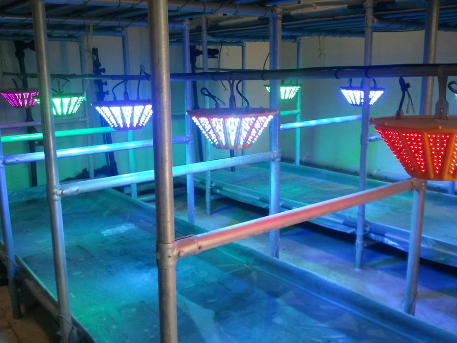 LED Lab